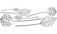 Samolepka v balení -Dekorační listí