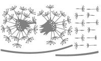 Samolepka v balení -Pampeliška s chmýřím
